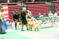 Dogshow 2017-07-08 Greater DeKalb KC--152545