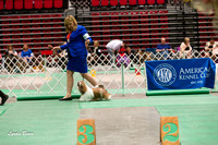 Dogshow 2017-04-08 KC of Yorkville--151531-2