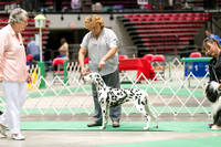 Dogshow 2017-07-08 Greater DeKalb KC--142358