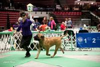 Dogshow 2017-04-08 KC of Yorkville--123219-2