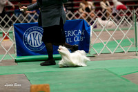 Dogshow 2017-04-08 KC of Yorkville--151816