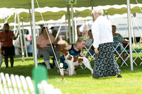 Dogshow 2017-06-04 untitled shoot--132943-2