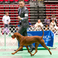 Dogshow 2017-04-08 KC of Yorkville--150251-2