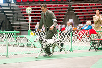 Dogshow 2017-04-08 KC of Yorkville--162324-2