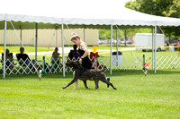 Dogshow 2017-06-04 untitled shoot--130821-3