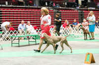 Dogshow 2017-07-08 Greater DeKalb KC--152443-4