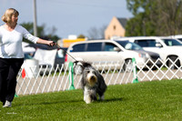 Dogshow 2017-08-01 Burlington WI KC D2--093958-2