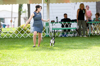 Dogshow 2017-08-01 Burlington WI KC D2--153925