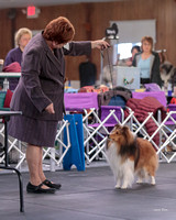 Dogshow 2018-04-07 Interlocking SSC--093924