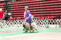 Dogshow 2017-07-08 Greater DeKalb KC--142231-2