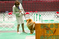 Dogshow 2017-07-08 Greater DeKalb KC--161010