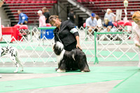 Dogshow 2017-07-08 Greater DeKalb KC--142400