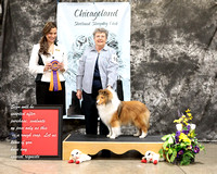 Dogshow 2017-03-05 Sheltie Win Photos--130201-3
