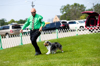 Dogshow 2017-08-01 Burlington WI KC D2--101900