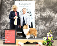 Dogshow 2017-03-05 Sheltie Win Photos--104316