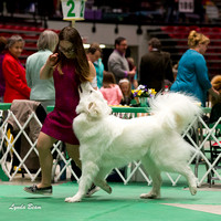 Dogshow 2017-04-08 KC of Yorkville--132926-2