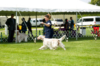Dogshow 2017-06-04 untitled shoot--102057-2