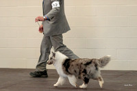 Dogshow 2018-03-04 CSSC Day 2 Candids--123117-2