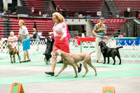 Dogshow 2017-07-08 Greater DeKalb KC--152442-2