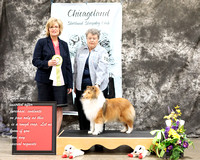 Dogshow 2017-03-05 Sheltie Win Photos--104246