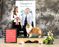 Dogshow 2017-03-05 Sheltie Win Photos--125950
