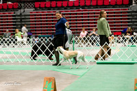 Dogshow 2017-04-08 KC of Yorkville--145158-4
