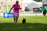 Dogshow 2017-07-31 Burlington WI KC--155350