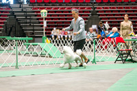 Dogshow 2017-04-08 KC of Yorkville--162348-3