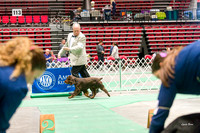 Dogshow 2017-04-08 KC of Yorkville--153514