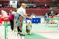 Dogshow 2017-07-08 Greater DeKalb KC--140925
