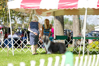 Dogshow 2017-08-01 Burlington WI KC D2--094015