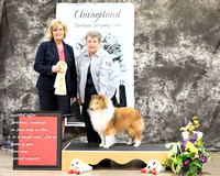 Dogshow 2017-03-05 Sheltie Win Photos--104323