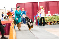 201629 Best of Breed Competition