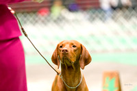 Dogshow 2017-04-08 KC of Yorkville--153630