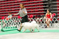 Dogshow 2017-07-08 Greater DeKalb KC--142240-5