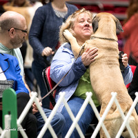 Dogshow 2017-04-08 KC of Yorkville--123817