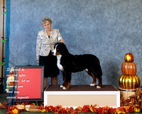 Dogshow 2017-10-29 BMDCNI Day 2 Win Photos--121223-2