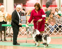 Dogshow 2017-12-09 Skokie Valley KC--153104