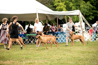 Dogshow 2016-08-13 Oak Creek--101633-2