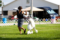 Dogshow 2017-07-31 Burlington WI KC--155447-3