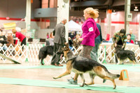Dogshow 2017-12-09 Skokie Valley KC--165022-2