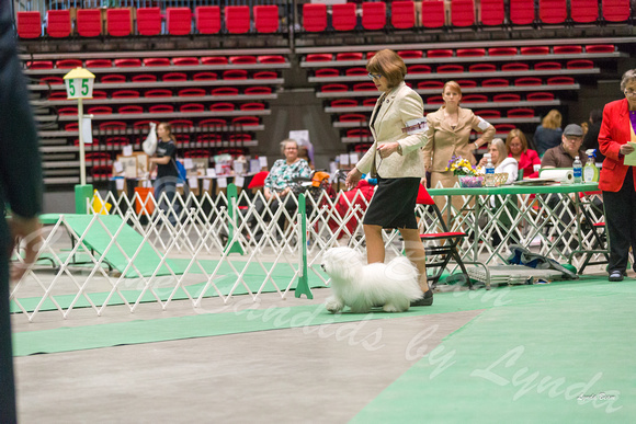 Dogshow 2017-04-08 KC of Yorkville--162359-2