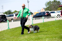 Dogshow 2017-08-01 Burlington WI KC D2--101901-3
