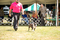Dogshow 2016-08-13 Oak Creek--150123-3