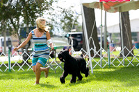 Dogshow 2017-08-01 Burlington WI KC D2--153859