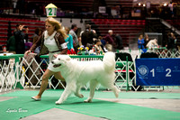 Dogshow 2017-04-08 KC of Yorkville--132824