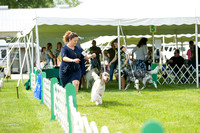 Dogshow 2017-06-04 untitled shoot--101830