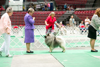 Dogshow 2017-07-08 Greater DeKalb KC--142406