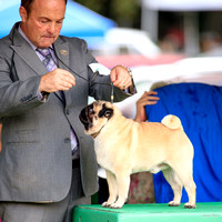 Dogshow 2016-08-13 Oak Creek--133215-3