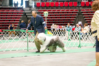 Dogshow 2017-04-08 KC of Yorkville--174204-2